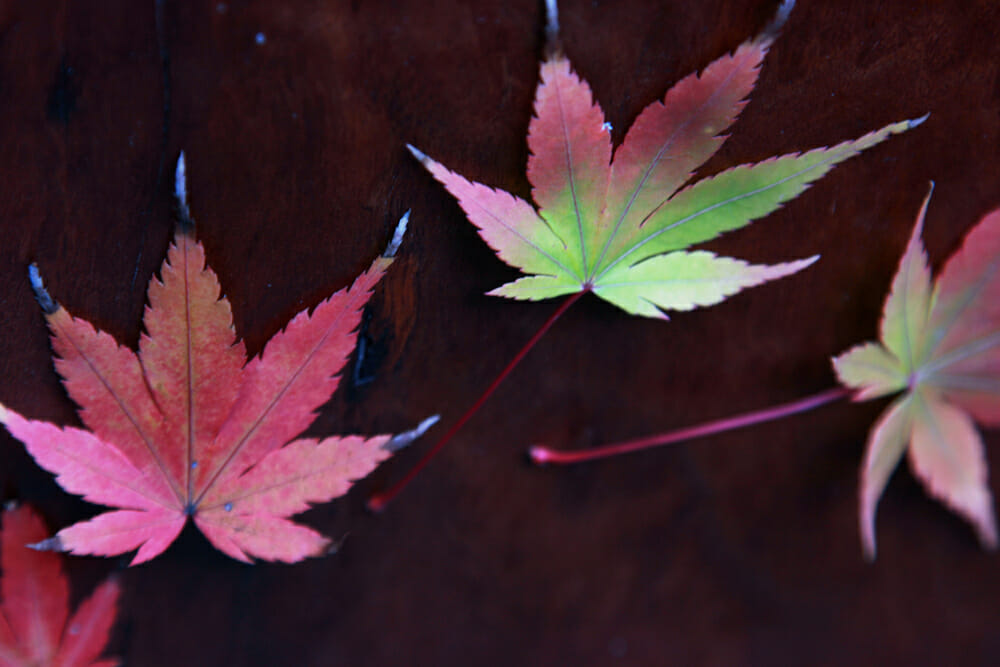 Autumn - leaves 1