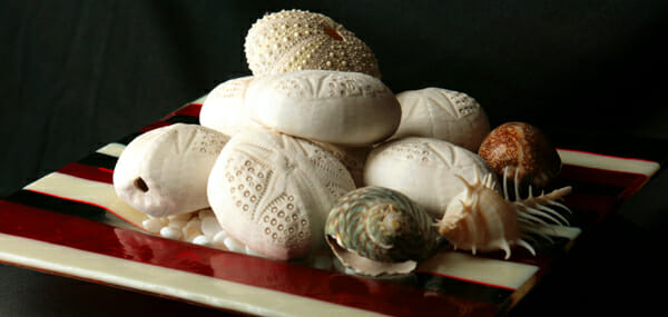 seashells at home